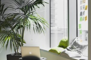 workspace with plant and laptop